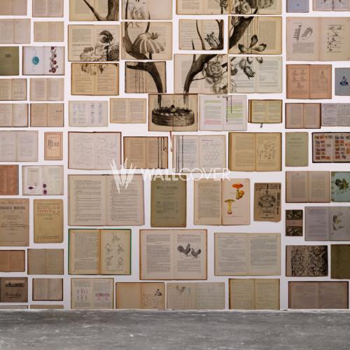 EKA-02 Biblioteca by Ekaterina Panikanova NLXL